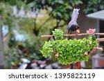 taiwan blue magpie  urocissa...   Shutterstock . vector #1395822119