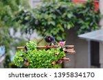 taiwan blue magpie  urocissa...   Shutterstock . vector #1395834170
