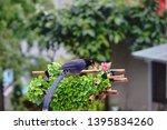 taiwan blue magpie  urocissa...   Shutterstock . vector #1395834260