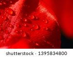 close up of a leaf of red tulip ... | Shutterstock . vector #1395834800