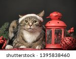 cat in a christmas santa hat... | Shutterstock . vector #1395838460