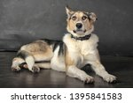 white tricolor mongrel dog on a ... | Shutterstock . vector #1395841583