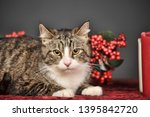 striped cat and christmas... | Shutterstock . vector #1395842720