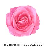Stock photo colorful bright pink rose flowers blooming with water drops top view isolated on white background 1396027886