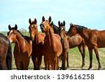 a horse with a foal in the... | Shutterstock . vector #139616258