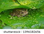 surreptitious toad from enemies ... | Shutterstock . vector #1396182656