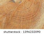 freshly cut tree trunk  closeup ... | Shutterstock . vector #1396232090