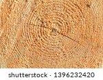 freshly cut tree trunk  closeup ... | Shutterstock . vector #1396232420