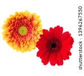 two   orange and red gerbera... | Shutterstock . vector #1396267550