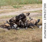 pack of rare african wild dogs  ... | Shutterstock . vector #1396317200