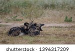 two african wild dogs  part of... | Shutterstock . vector #1396317209