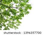 fresh light green leave... | Shutterstock . vector #1396357700