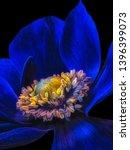 Fine Art Still Life Floral...