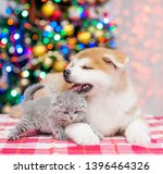 Stock photo akita inu puppy and baby kitten lying together with christmas tree on a background 1396464326