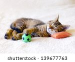Stock photo kitten sleeping on a pillow with a soccer ball 139677763