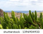 oceanscape  small and green... | Shutterstock . vector #1396904933