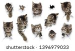 Stock photo cats in holes of paper little grey tabby kittens peeking out of torn white background ten funny 1396979033