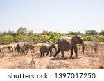 african elephant wildlife south ... | Shutterstock . vector #1397017250