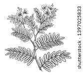 realistic medicinal plant senna.... | Shutterstock .eps vector #1397025833