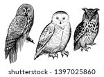 owls. realistic birds isolated... | Shutterstock .eps vector #1397025860