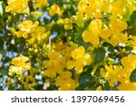 Beautiful Yellow Flowers With...