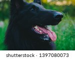 summer portrait of black...   Shutterstock . vector #1397080073