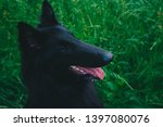 summer portrait of black...   Shutterstock . vector #1397080076