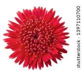 gerbera daisy flower  gerbera... | Shutterstock . vector #1397110700