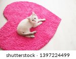 Stock photo white siamese kitten lying on a pink heart shaped carpet little beautiful cat at home background 1397224499