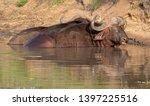 african buffalo basking in the... | Shutterstock . vector #1397225516