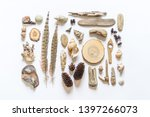 Flat Lay. Seashells And Sticks...