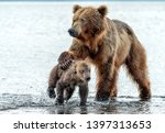 Stock photo mom bear with her puppy 1397313653