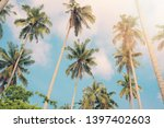 Coconut Trees By The Sea On...