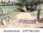 cow mammals on middle of road... | Shutterstock . vector #1397462183