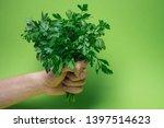 a bunch of green parsley in... | Shutterstock . vector #1397514623