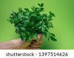 a bunch of green parsley in... | Shutterstock . vector #1397514626