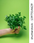 a bunch of green parsley in... | Shutterstock . vector #1397514629