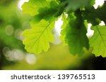 green oak leaves | Shutterstock . vector #139765513