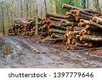 felled trees  deforestation ... | Shutterstock . vector #1397779646