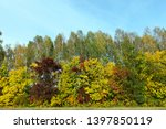 maple trees growing in the park.... | Shutterstock . vector #1397850119