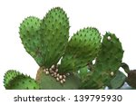Prickly Pear Cactus Covered...