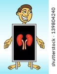 roentgen x ray kidney   Shutterstock .eps vector #139804240