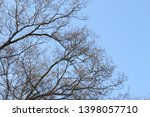 bare tree with background of... | Shutterstock . vector #1398057710