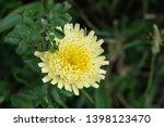 smooth golden fleece... | Shutterstock . vector #1398123470