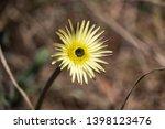 smooth golden fleece... | Shutterstock . vector #1398123476