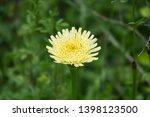 smooth golden fleece... | Shutterstock . vector #1398123500
