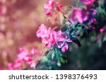 beautiful photo of pink spring... | Shutterstock . vector #1398376493