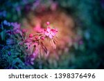 beautiful photo of pink spring... | Shutterstock . vector #1398376496