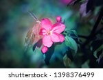 beautiful photo of pink spring... | Shutterstock . vector #1398376499