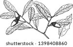 a picture showing the branch of ...   Shutterstock .eps vector #1398408860